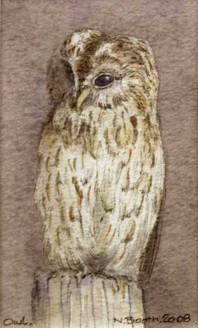 Owl, painted 2008